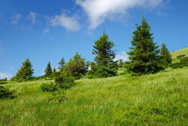 Groene heuvel met bomen en bewolkte hemel royalty-vrije stock foto's