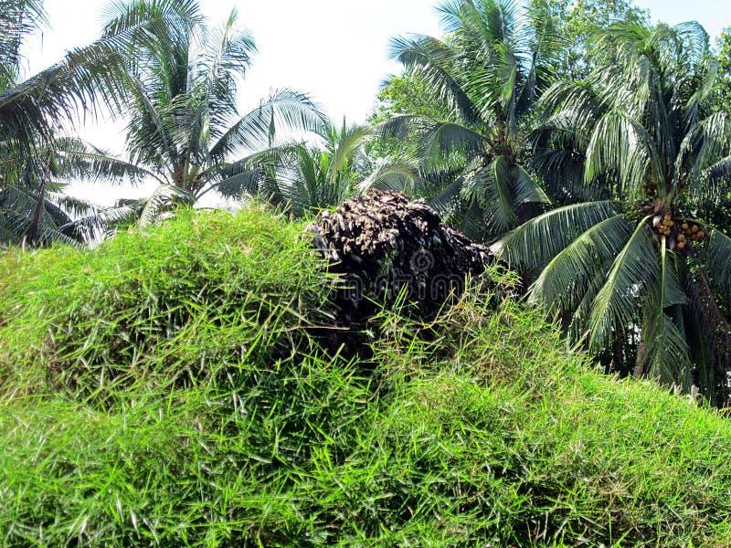 Groene Heuvel op het Eiland Bangka royalty-vrije stock afbeeldingen