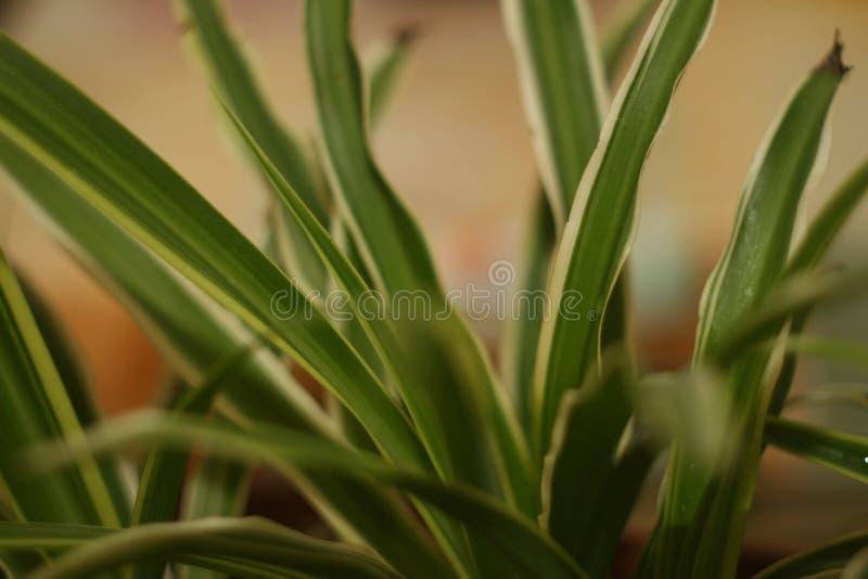 Groene installatie stock foto's
