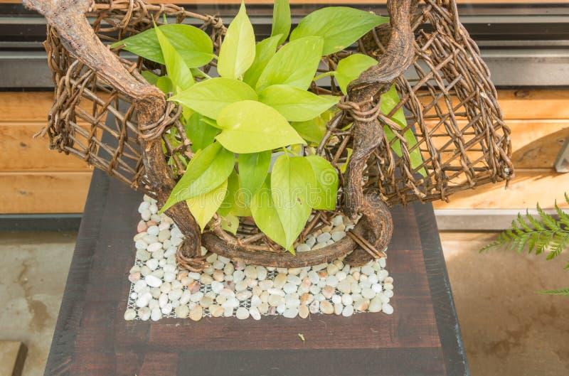 Groene installatie in tuin stock fotografie