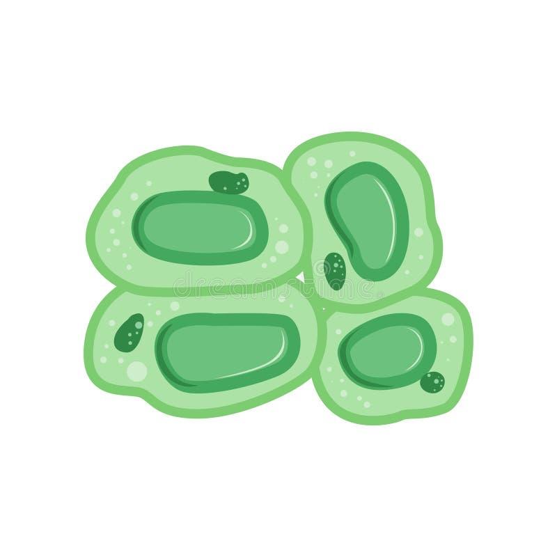 Groene installatiecellen met kern Biologie en de microbiologieconcept Vlak vectorontwerpmalplaatje voor infographic geneeskunde stock illustratie