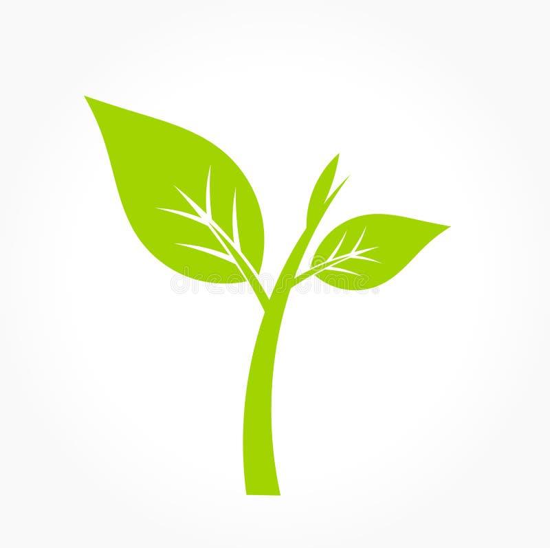 Groene installatiepictogram vector illustratie