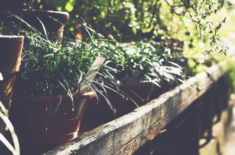 Groene installaties in de potten van de kleibloem in botanische tuinserre stock fotografie