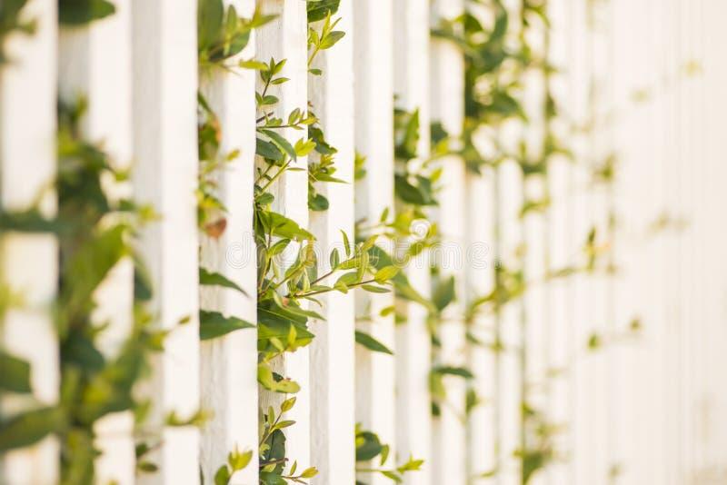 Groene installaties die door witte piketomheining groeien royalty-vrije stock afbeeldingen
