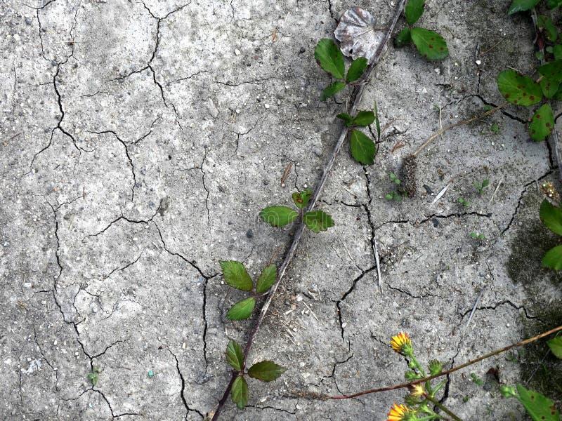 Groene Installaties die in gebarsten droge modder groeien stock fotografie