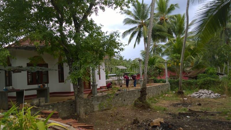 Groene installaties in Sri Lanka royalty-vrije stock foto
