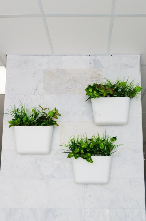 Groene installaties in witte potten op de muur, het verticale tuinieren in het binnenland royalty-vrije stock foto's