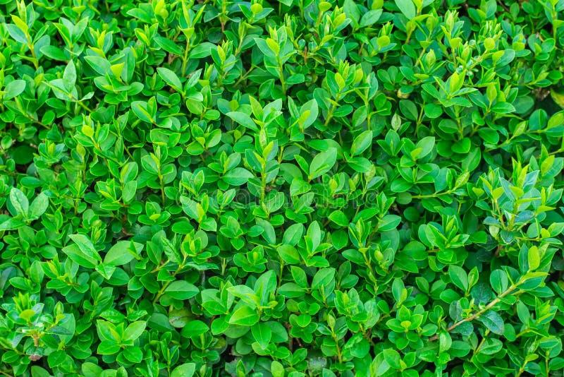 Groene intense achtergrond, heel wat blad stock afbeelding