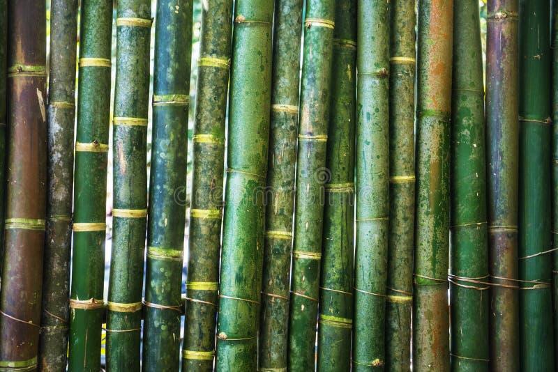 Groene jonge bamboemuur als achtergrond royalty-vrije stock foto's