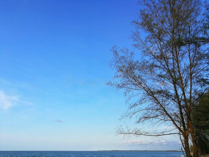 Groene jonge bladeren en zon op blauwe hemel stock fotografie