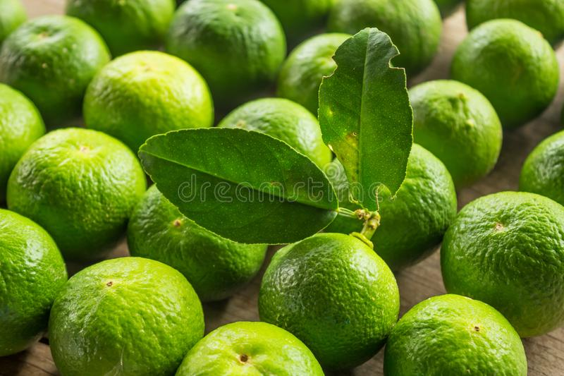 Groene kalk stock fotografie