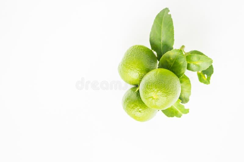Groene kalk royalty-vrije stock fotografie