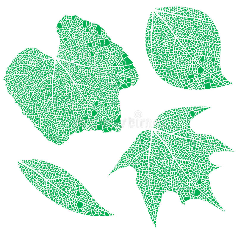 Groene kantbladeren royalty-vrije illustratie