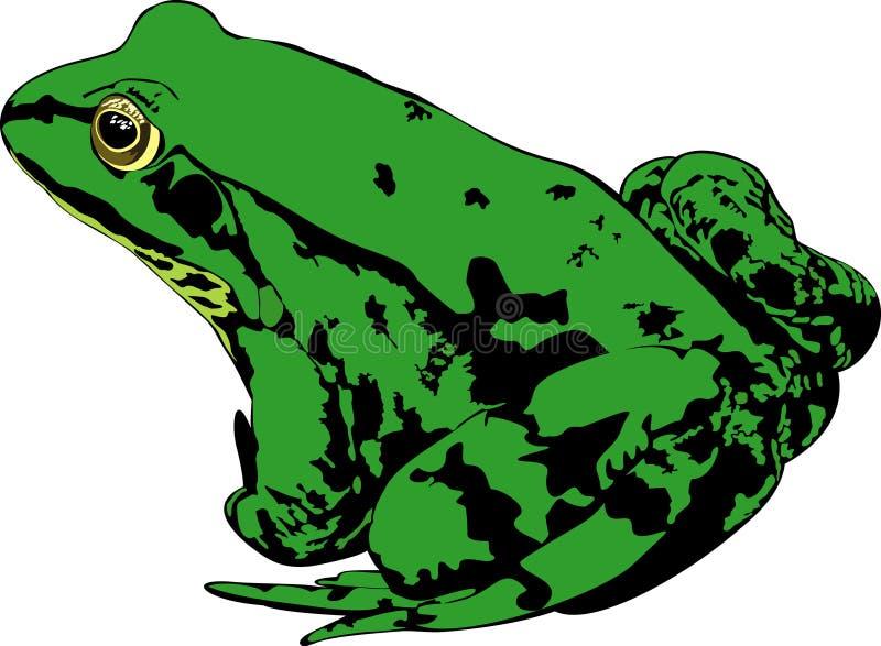 Groene kikker stock afbeelding