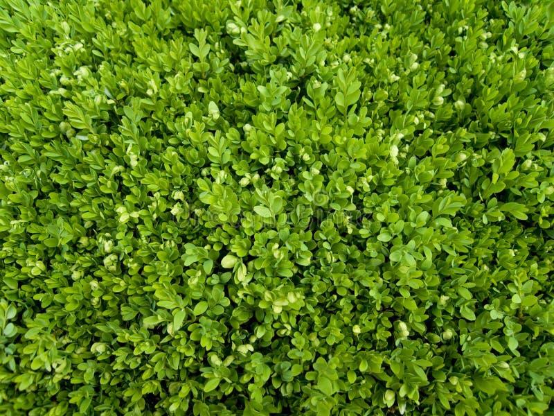 Groene kleine bladeren royalty-vrije stock afbeelding