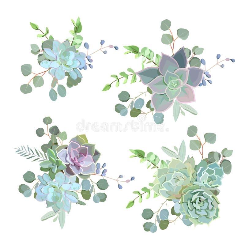 Groene kleurrijke succulente vector het ontwerpvoorwerpen van Echeveria vector illustratie