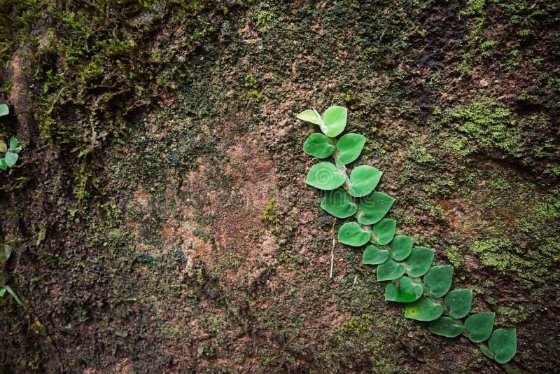 Groene klimplant royalty-vrije stock afbeelding