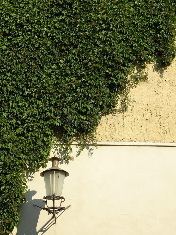 Groene klimplant en lamp stock afbeeldingen