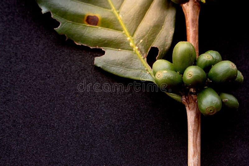 Groene koffiebonen stock afbeelding