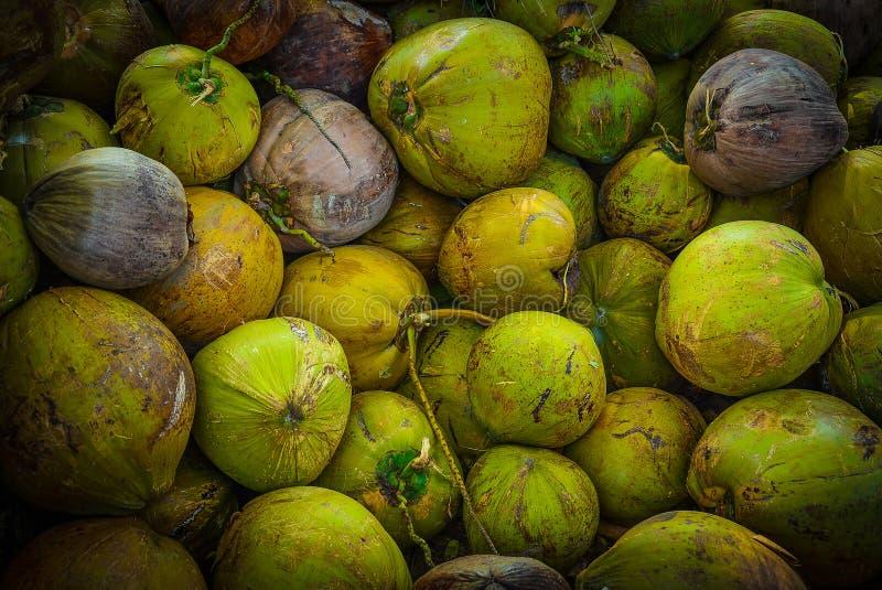 Groene kokosnoot stock foto's