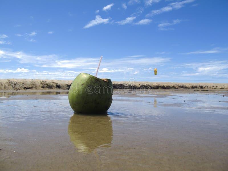 Groene kokosnoot op strand en overzees met blauwe hemel - vakanties stock afbeelding