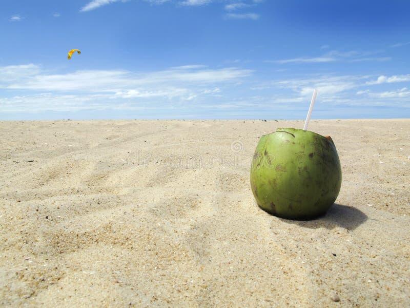 Groene kokosnoot op strand met blauwe hemel - vakantie royalty-vrije stock afbeeldingen