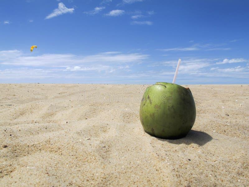 Groene kokosnoot op strand met blauwe hemel - vakantie royalty-vrije stock afbeelding