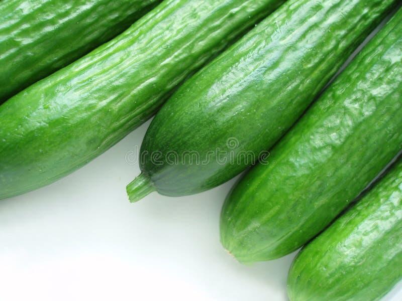 Groene komkommer royalty-vrije stock afbeelding
