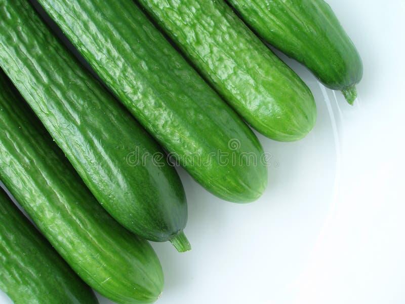 Groene komkommer stock foto