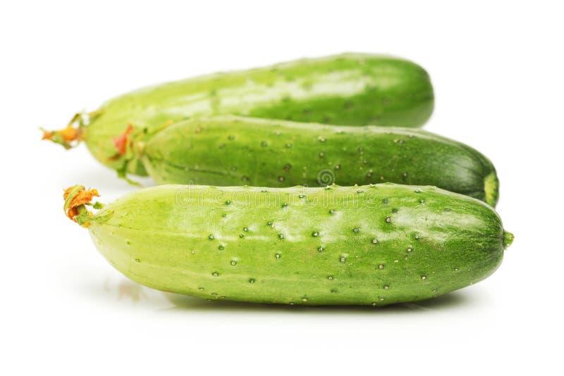 Groene komkommer drie royalty-vrije stock foto's