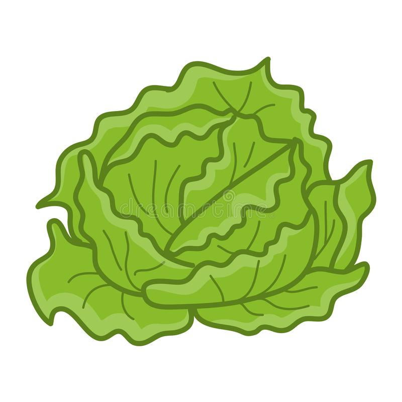 Groene kool geïsoleerde illustratie royalty-vrije illustratie