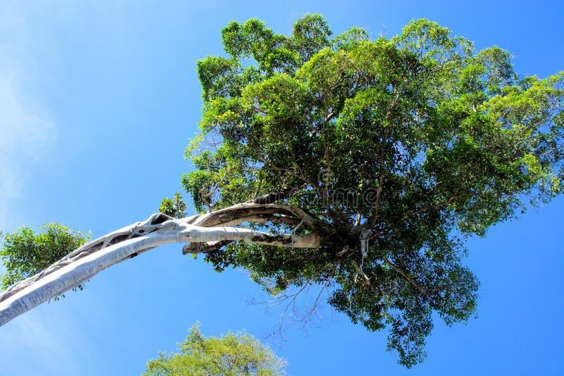 Groene kroon van een tropische boom royalty-vrije stock afbeeldingen