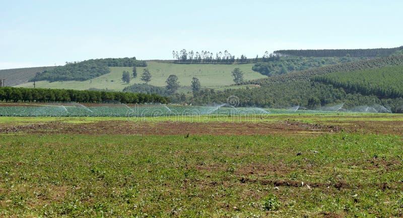 Groene landirrigatie stock afbeeldingen