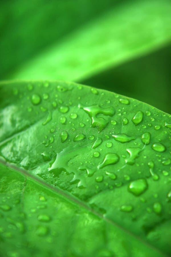 Groene leaf6 royalty-vrije stock afbeeldingen