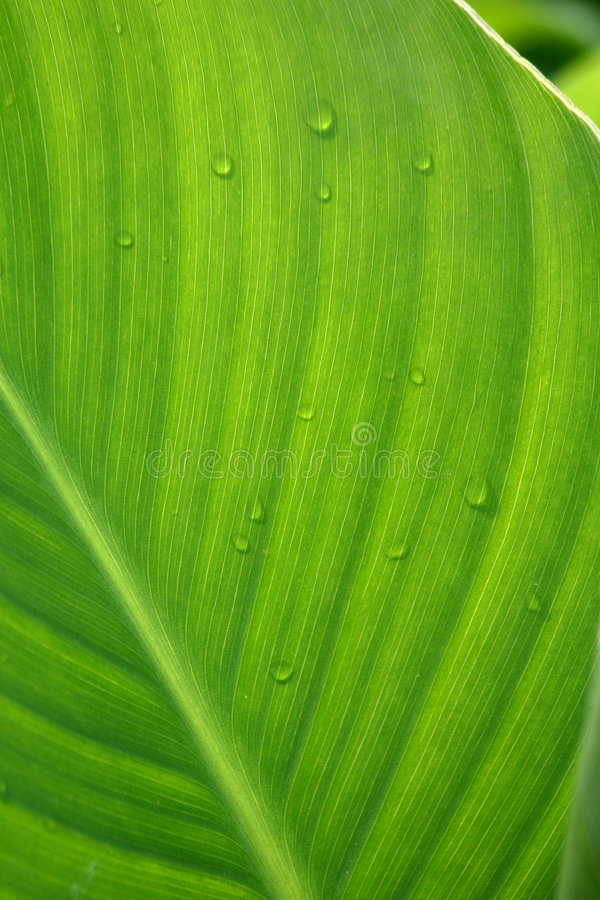 Groene leafe stock afbeeldingen