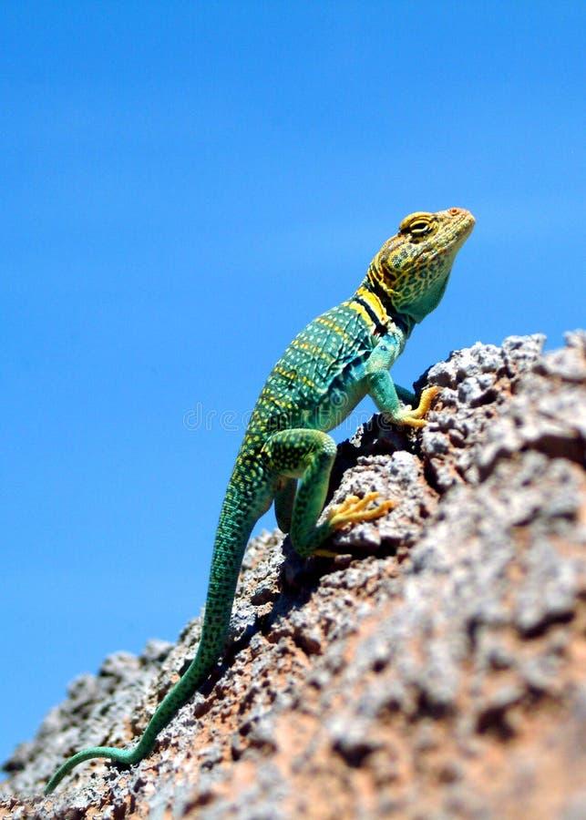 Groene leguaan in Dinosauruspark royalty-vrije stock afbeelding