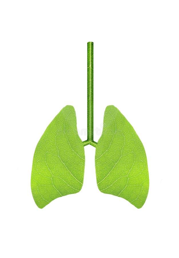 Groene longen royalty-vrije stock foto's
