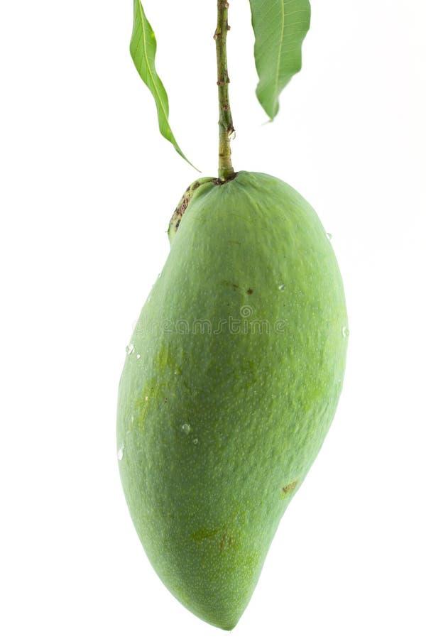 Groene Mango stock fotografie