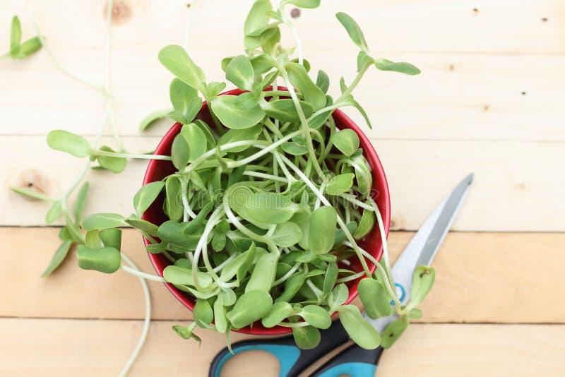 Groene micro, groenten royalty-vrije stock afbeeldingen