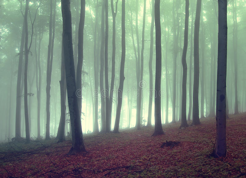 Groene mist in een mooi bos royalty-vrije stock foto