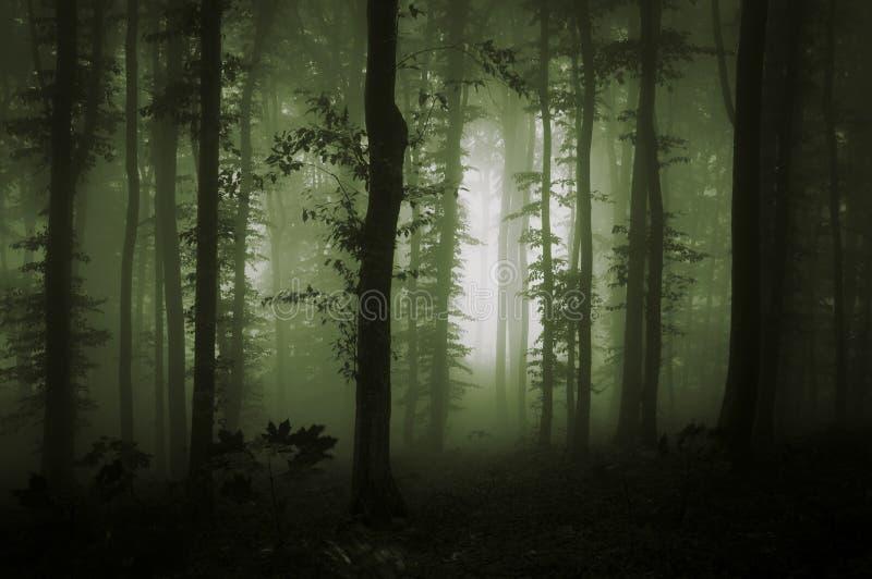 Groene mist in natuurlijk bos royalty-vrije stock foto