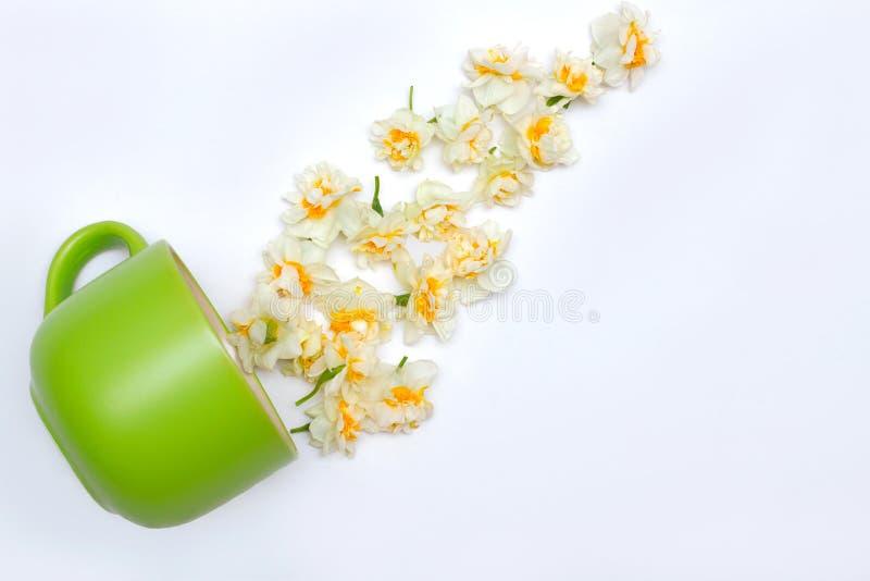 Groene mok en gele narcissen op witte achtergrond Leef nu adem stock afbeelding