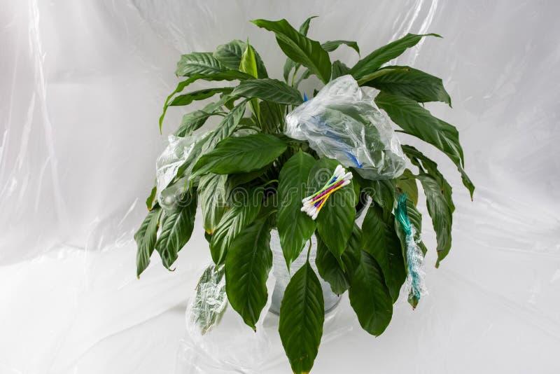 Groene mooie verse installatie die met gevaarlijk giftig plastiek wordt beïnvloed royalty-vrije stock afbeeldingen