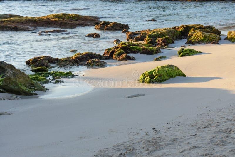 Groene mos behandelde koraalrifrotsen op een zandig strand Riviera Maya, Cancun, Mexico royalty-vrije stock afbeeldingen