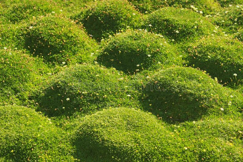 Groene moskussens in zonlicht stock afbeeldingen