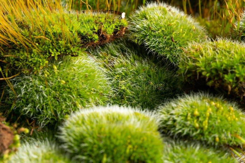 Groene mossen op wit stock afbeeldingen