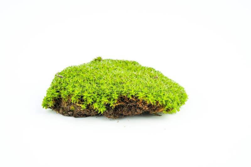 Groene mossen op wit stock afbeelding