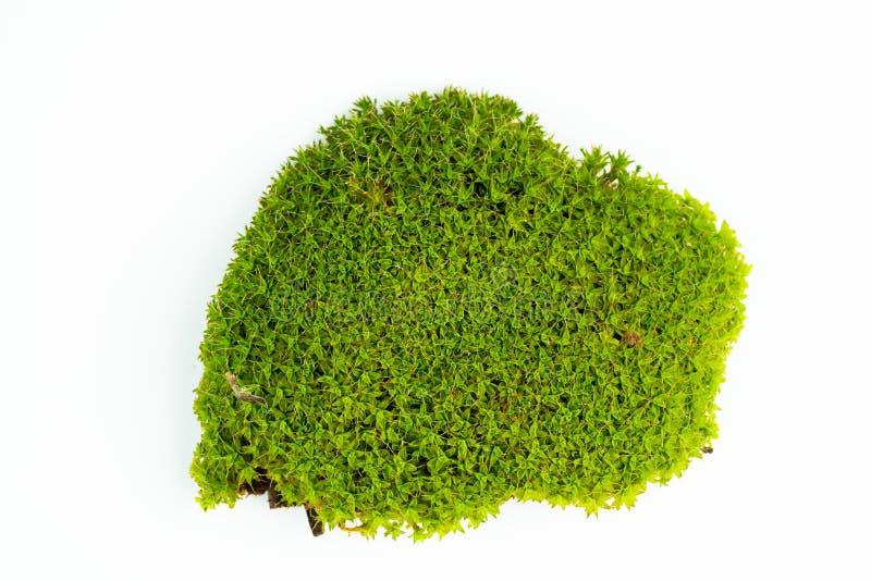 Groene mossen op wit stock foto's