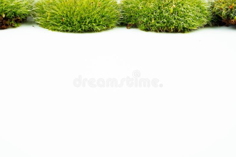 Groene mossen op wit royalty-vrije stock foto's