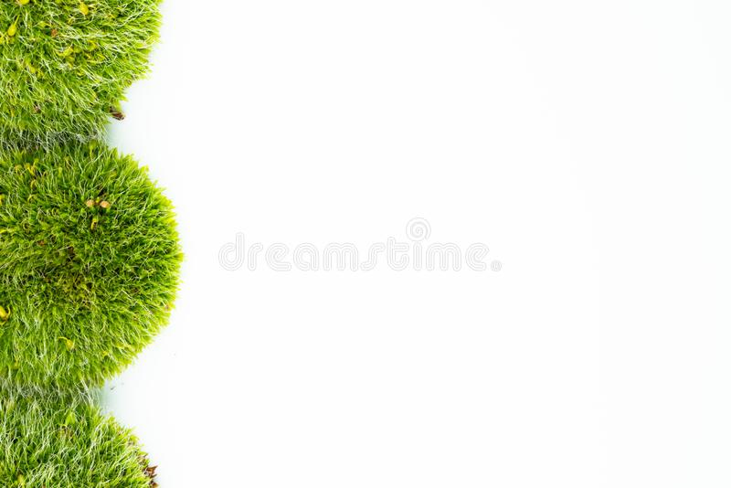 Groene mossen op wit royalty-vrije stock afbeeldingen